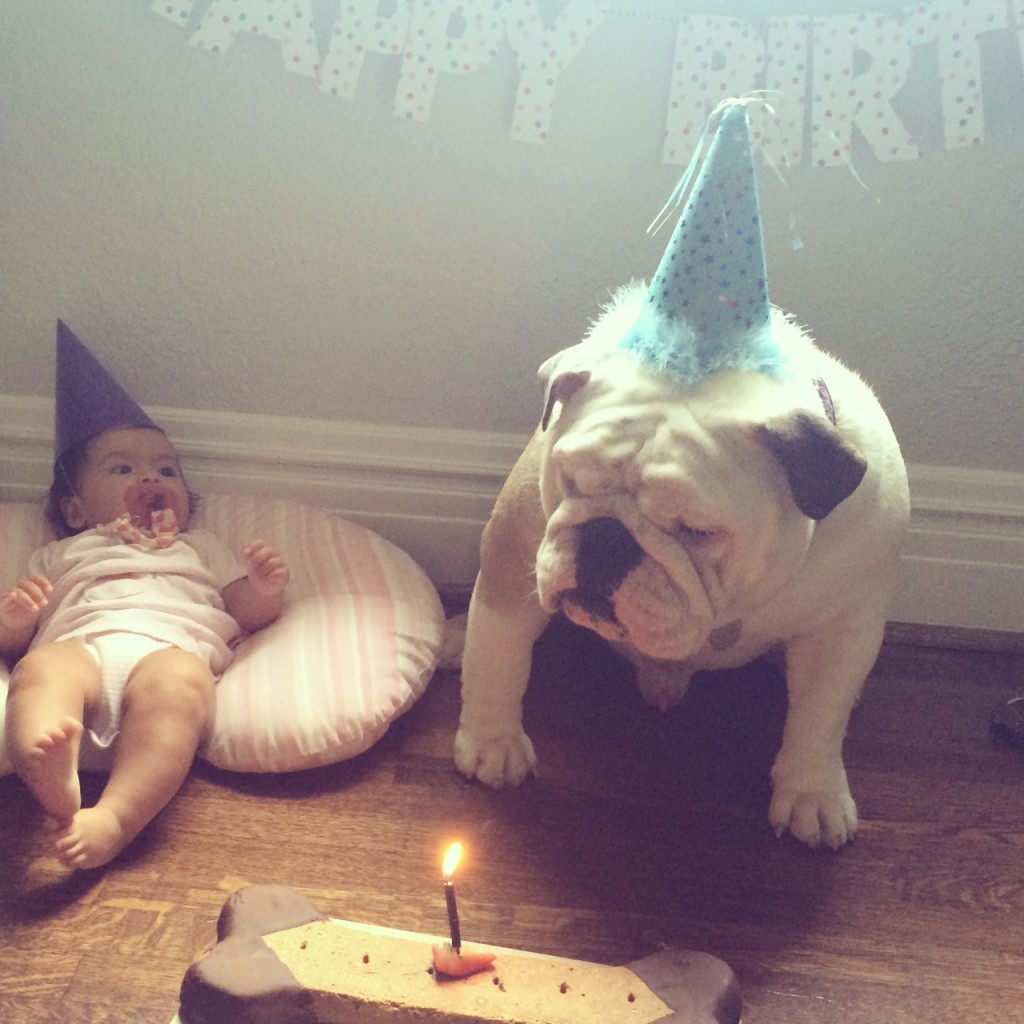 baby and bulldog - grace and diego