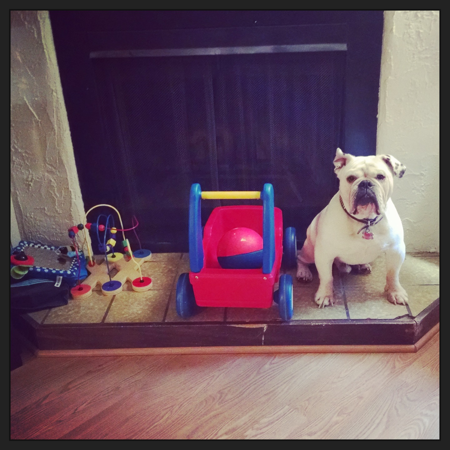 english bulldog with kids toys