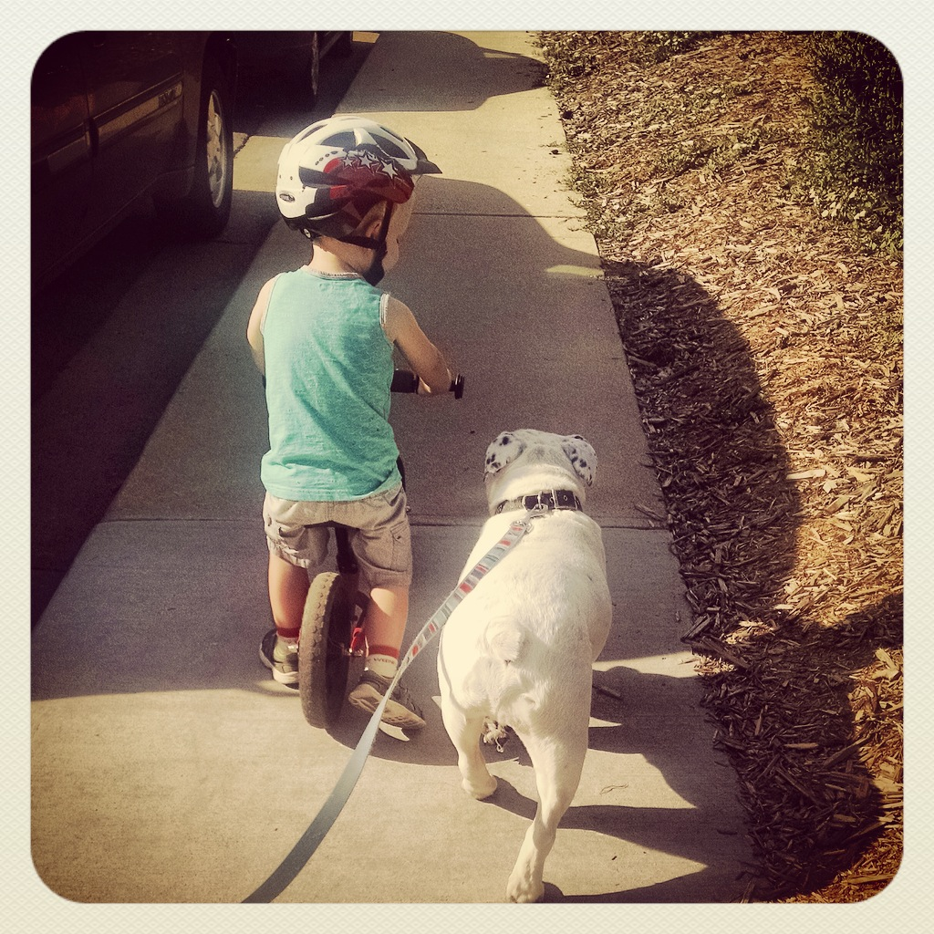 toddler-bulldog-strider-bike